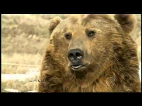 Cute - Man's Grizzly Bear Pet