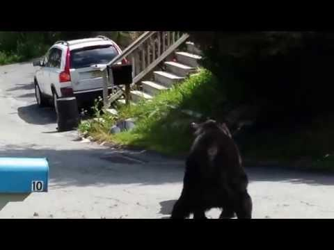 New Jersey Black Bears Get Into A Fight
