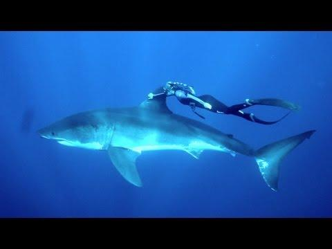Crazy - Blonde Girl Swims With The Shark