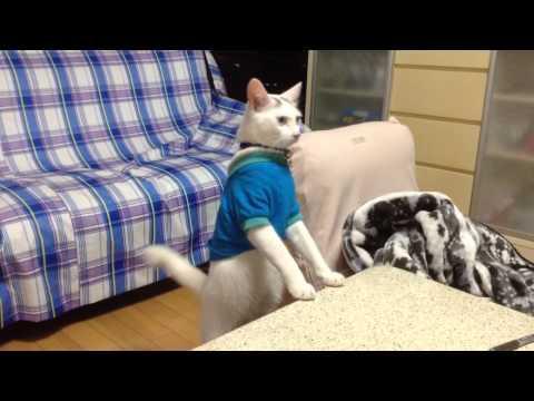 Cat Shows Off Walking Backwards Trick