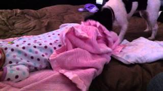 Dog Takes Care Of Sleeping Baby Girl