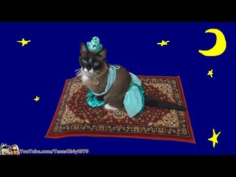 Jasmine The Cat Rides The Flying Carpet