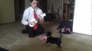 Guy Scares His Puppy