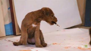 Irish Terrier Puppies Discover Painting Supplies