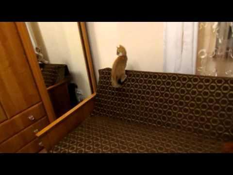 FAIL - Kitten Jumps Into The Mirror