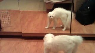 Funny Animals Reaction In Front Of Mirror