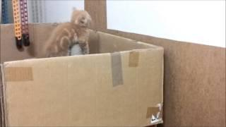 Cat Helps Her Little Kitten Escape From The Box