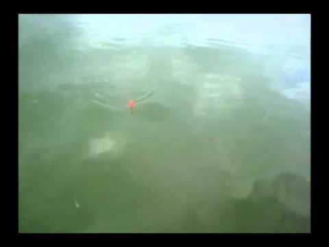 Jokes - Guy Gets Attacked By Catfish