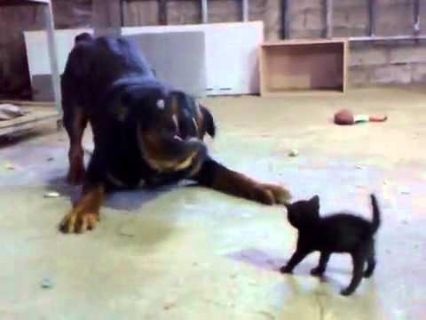 Tiny Dog Scaring Big Dog