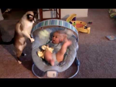 Cute - Cat Makes Baby Laugh