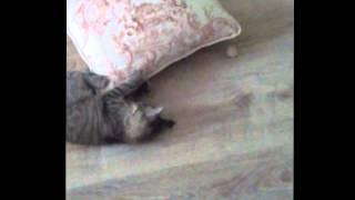 Kitten Works Out Using A Pillow