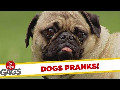 Ultimate Just For Laughs Pranks - Dogs Edition
