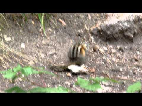 Chipmunk - What are you looking at?