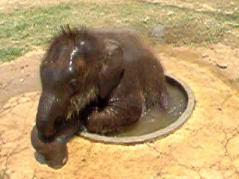 Cute - Small Jacuzzi For Baby Elephant