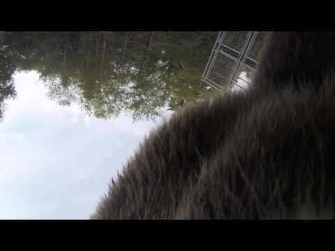 Hungry Grizzly Bear Tries To Chew On The Camera