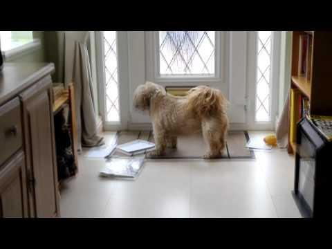 Jokes - Dog Waits For The Mail