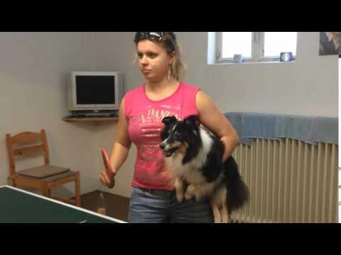 Dog Loves To Play Ping Pong