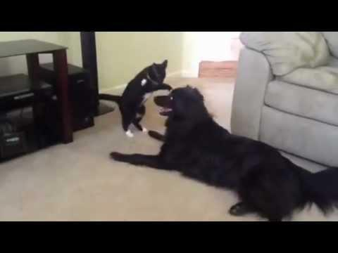 Cute - Cat Vs Dog Wrestling Match