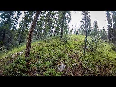Grizzly Bear Vs Mountain Bikers