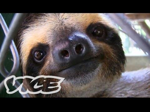 Cute - Sanctuary For Baby Sloths