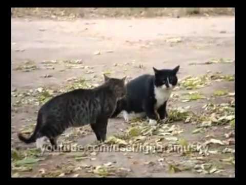Jokes - Dog Stops Cat Fight