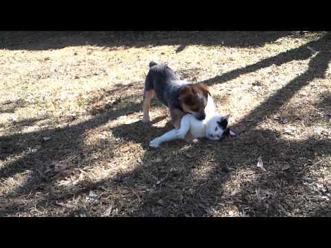 Cute - Cat Vs Puppy Fight