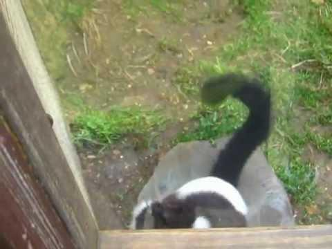 Jokes - Jumping Lemur Wants To Get Out