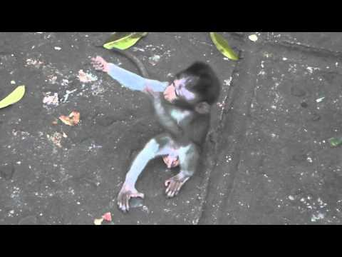 Cute - Baby Monkeys Hug Each Other