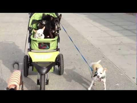 Cute - Dogs Pull Stroller Full Of Dogs