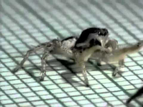 Jokes - Spider Shows Off Dance Moves