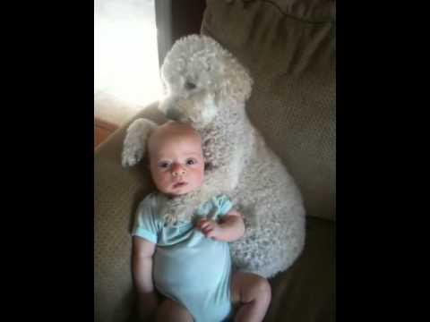 Jokes - Dog Holds The Baby Hostage