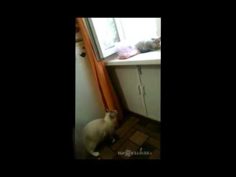 Napping Cat Gets Scared By Rude Cat