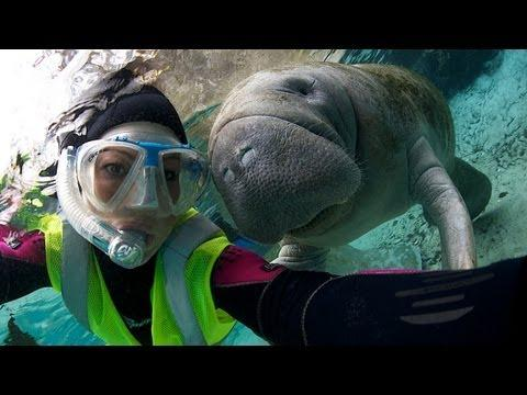 Cute - Manatee Likes To Hold Hands