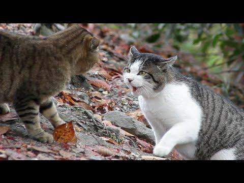 Jokes - One Intense Cat Fight