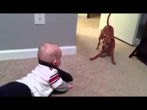 Jokes - Crawling Baby Vs The Dog