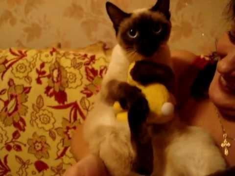 Cute - Cat Hugs Stuffed Toy