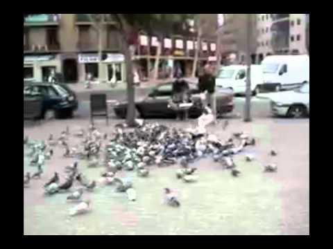 How To Deal With The Pigeons