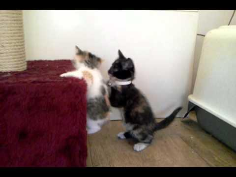 Cute - Kitten Helps Buddy