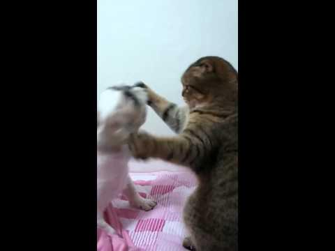 Boxing Fight Between The Cat And Dog