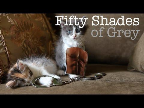 50 Shades Of Grey Movie Reenacted By Kittens