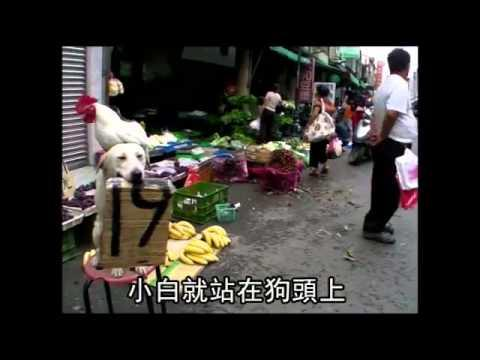 Cute - Dog Goes For A Walk With The Chicken