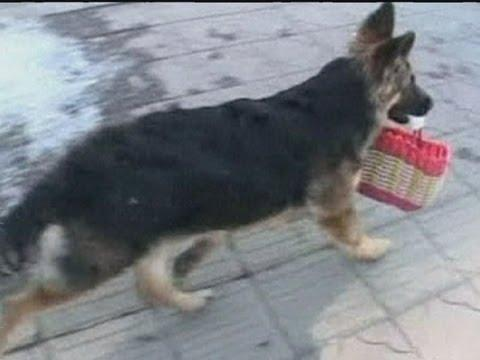 Cute - Dog Goes For Grocery Shopping