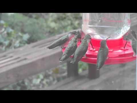 Cute - Hungry Hummingbirds