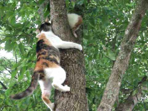 Cute - Mother Cat Rescues Kitten From Tree