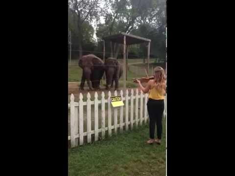 Elephants Enjoying Violin Music