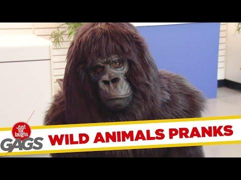 Ultimate Just For Laughs Pranks - Wild Animals Edition
