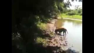 Dog Catches A Big Fish