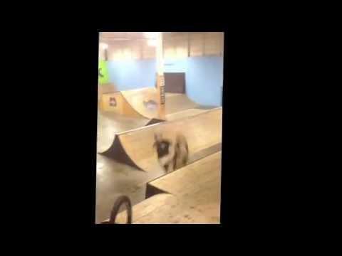 Guy Survives The BMX Backflip Attempt Fail